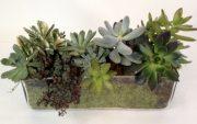 Plants-14