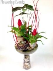 Plants 10