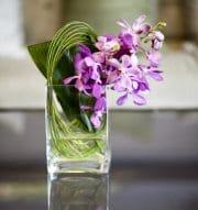 Orchids/Mokaras