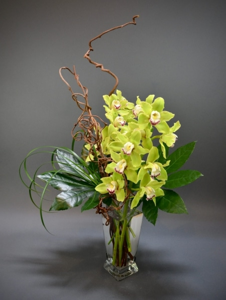 Striking orchids